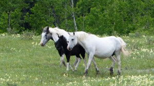 June 4 - Seebe Canyon Hike - Mares and Colt